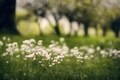 Picture greens, grass, macro, trees, flowers, blur, white