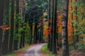 Picture nature, road, trees, autumn, forest, leaves