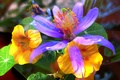 Picture leaves, line, flowers, petals, garden