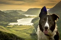 Picture dog, mountains, nature, The border collie, panorama, face, lake, valley