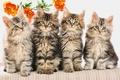 Picture striped, kittens, Quartet, flower, fluffy