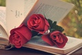 Picture flowers, page, roses, book, red