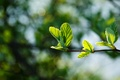 Picture macro, branch, background, young, foliage, beautiful, juicy, glare, green, spring