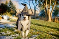 Picture dog, holiday, hat