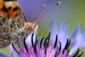 Picture macro, background, butterfly, blur, Flower