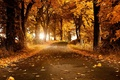 Picture road, Falling leaves, Park, autumn
