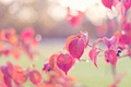 Picture leaves, drops, Rosa, glare, berries, branch, pink, autumn