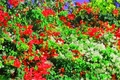 Picture red, bright, green, widescreen, widescreen, background, blooming, blur, Wallpaper, leaves, tree, full screen, branches