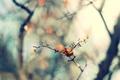Picture nature, sprig, focus, spring, blur, leaf, leaf, bokeh