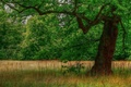 Picture forest, grass, tree, glade, trunk, crown