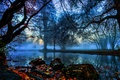 Picture fog, England, London, trees, leaves, Morden Hall Park, river, branches, autumn, stones