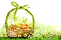 Picture grass, basket, chamomile, spring, Easter, spring, Easter, eggs, chamomile