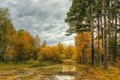 Picture autumn, autumn, sky, trees, forest, forest, the sky