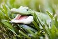Picture crocodile, grass, Toy