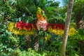 Picture flowers, palm trees, garden, Singapore, the bushes, leaves