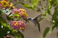 Picture leaves, the sun, flowers, bird, Hummingbird