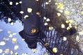 Picture The city, Autumn, Petersburg, Summer garden