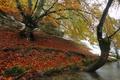 Picture shore, river, autumn, snow, trees
