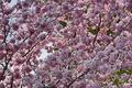 Picture flowers, spring, flowering, branch, Spring, flowering