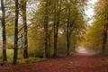 Picture fog, road, trees, autumn