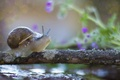 Picture flowers, Wallpaper from lolita777, crossing, blurry, sprig, water, house, snail