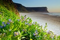 Picture sea, beach, flowers, nature