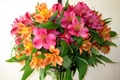 Picture flower, flowers, nature, bouquet, alstremeria, Alstroemeria