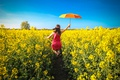 Picture umbrella, field of gold, girl