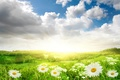 Picture flowers, light, nature, chamomile, field, clouds, the sun, the sky, grass, landscape