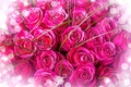 Picture flowers, pink roses, bouquet, pink background