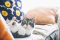 Picture cat, mustache, legs, wool, looks, cat