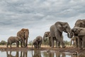 Picture elephants, Africa, nature