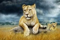 Picture family, lioness, the cubs, Savannah