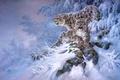 Picture Snow leopard, winter, snow, forest, art