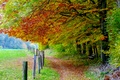 Picture bench, trees, leaves, Nature, autumn, leaves, trail, autumn, trees, field, nature