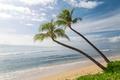 Picture The sky, Sand, Palm trees, Nature, Wave, Coast, Hawaii, USA