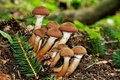 Picture mushrooms, macro, mushrooms, autumn