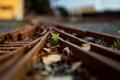 Picture macro, grass, railroad