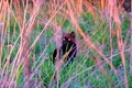Picture grass, cat, sunset, loneliness