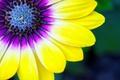 Picture petals, paint, flower