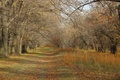 Picture path, naked autumn, Autumn, trees, branches, leaves