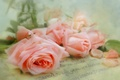 Picture style, petals, letter, roses, tenderness
