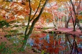 Picture autumn, Park, garden, trees, pond, leaves