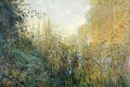 Picture nature, The reeds, picture, Claude Monet
