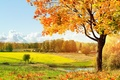 Picture light, trees, green, Autumn, meadow, falling leaves, warm, solar, autumn