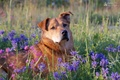 Picture portrait, animals, Dog