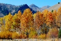 Picture the sky, autumn, mountains, trees