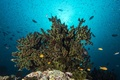 Picture reef, surface, sunlight, coral, fish, the bottom of the sea