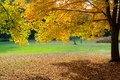 Picture autumn, grass, leaves, Park, tree