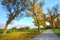 Picture Park, trees, road, bench, grass, autumn, leaves